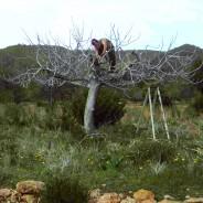El Bosque Comestible de la CIE