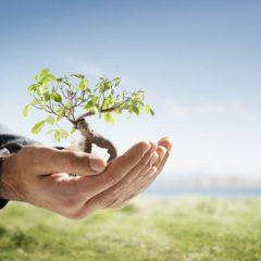 Día de la Tierra 2015 – Planta un árbol