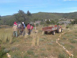 Descansando y tractor p