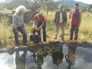 04 Nuevas plantas para el estanque p