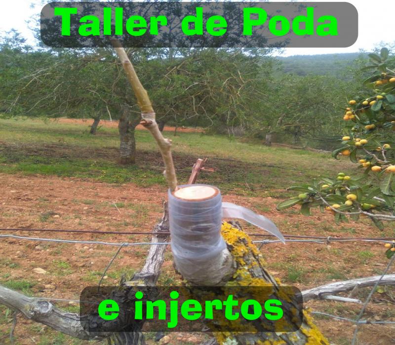 Taller de Poda