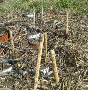 26º Encuentro Activo en el Bosque Comestible